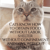 10 Inspirational & Humorous Cat Quotes